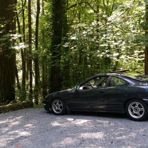 green dc2 forest